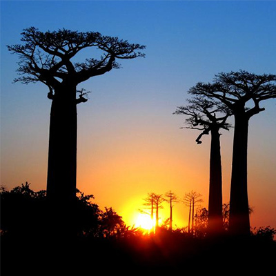 Replanting the Forests of Madagascar