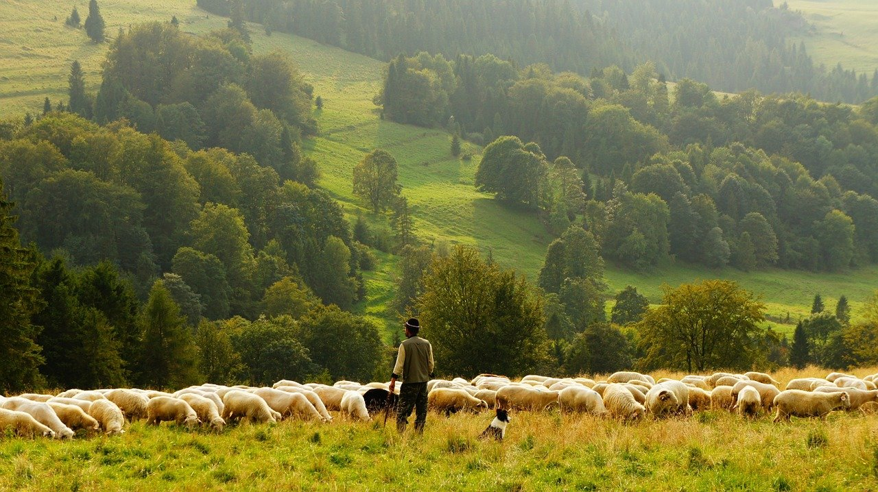 God of Shepherds